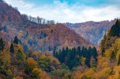 Natural background - autumn forest with yellow trees in hills. Bright autumn, change of seasons stock photography