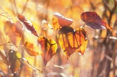 Natural background with autumn leaves in the sunlight. Selective focus. Art natural image stock images