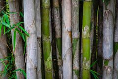 Natural background, bamboo tree and bamboo leaves.  royalty free stock photo