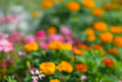 Natural background - blurry flower-bed Stock Photo
