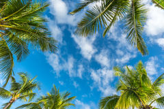 Natural background from Boracay island with coconut palms tree Stock Image