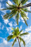 Natural background from Boracay island with coconut palms tree Royalty Free Stock Photo