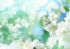 Spring scene. Royalty Free Stock Photos