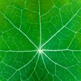Natural background. Closeup of green leaf. Shallow depth of field Stock Photos