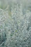 Natural background. Closeup of steppe autumn grass Royalty Free Stock Photo