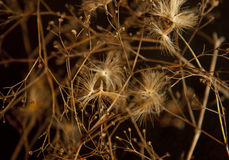 Natural background. dried flowers. Stock Photos