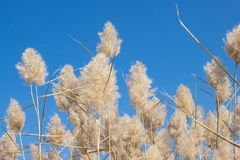 Natural background. Dry fluffy autumn grass Stock Photos
