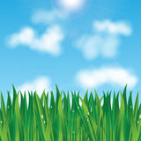 Natural background. Eco background.green grass with dew drops on a background of blue sky Stock Photos