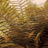 Natural background of embossed fern Stock Image