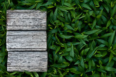 Natural background. Natural background with an empty space Stock Photos