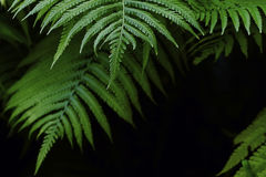 Natural background of fern leaves in dark tones frame the frame. Space, there is room for text Stock Photos