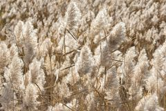 Natural background. Field of dry fluffy autumn grass Royalty Free Stock Photo