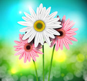 Natural background with gerberas Royalty Free Stock Image