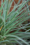 Natural background of grass. Close-up of grass against red blurred backgroundrn Stock Images