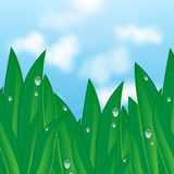 Natural background. Green grass with dew drops on a background of blue sky and clouds.natural background.summer and spring design Stock Image