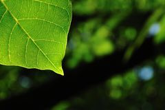 Natural background with green leaf Royalty Free Stock Image