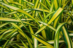 Natural background of green leafy plants Stock Photo