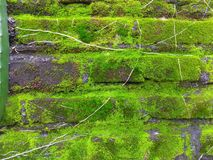 Natural background.Green moss on brick wall stock images