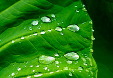 Natural background of green plant leaf with raindrops Royalty Free Stock Photos