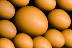 Natural background - hen eggs Stock Images