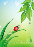 Natural background with ladybird Royalty Free Stock Photography