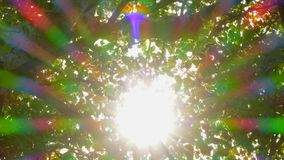 Natural background Leaves through which the sun`s rays fall. The natural background, the leaves of the tree penetrate through the sun rays. The glow forms a stock video footage