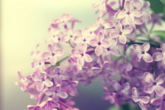 Natural background with lilac flowers. Floral background. pastel toning Royalty Free Stock Photos