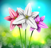 Natural background with lilies Royalty Free Stock Images