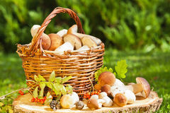 Natural background with mushrooms Stock Photography
