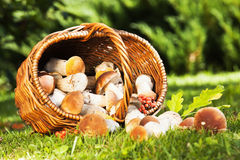 Natural background with mushrooms Royalty Free Stock Image