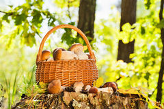Natural background with mushrooms Royalty Free Stock Photo