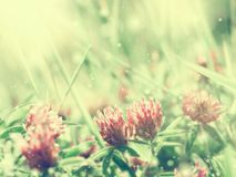 Natural background royalty free stock images