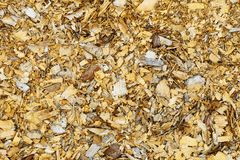 Natural background - old wood shavings Royalty Free Stock Photo