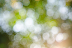 Natural background of out of focus forest Stock Photo