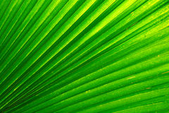 Natural background from palm leaf Royalty Free Stock Photo