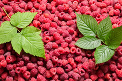 Natural background with raspberry and green leaves Stock Images