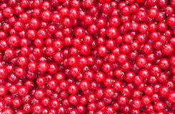 Natural background of a red currant Royalty Free Stock Images