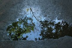 Natural background reflection of branches and leaves of trees in a puddle on the pavement stock photo