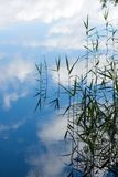 Natural background. Reflection tufts of aquatic grass plants in the lake. Natural background Royalty Free Stock Photography