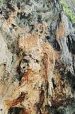 Natural background, rock texture closeup. Royalty Free Stock Photos