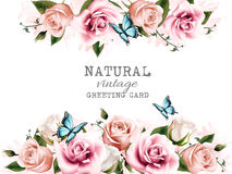 Natural background with roses. vector. Royalty Free Stock Images