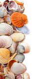 Natural background of seashells Stock Photo