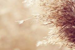 Natural background Stock Photos