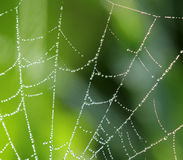Natural background with a spider web and drops Royalty Free Stock Photography