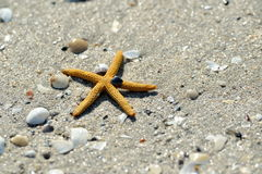 Natural background with starfish on wet sand Stock Images