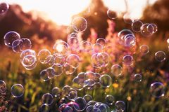 Natural background with summer clear green meadow with pink flowers and soap bubbles brightly shimmer and fly in the air at royalty free stock image