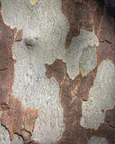 The natural background. The natural texture of bark tree Stock Photo
