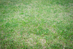 Natural background, a texture of a glade with grass, on the whole frame. Horizontal frame Royalty Free Stock Photos