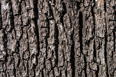 Natural background. Tree bark. Royalty Free Stock Photo