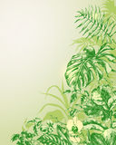 Natural  Background with  tropical plants. Royalty Free Stock Photography